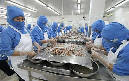 Shrimp exports: Fun but not happy