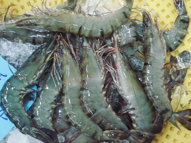 Black Tiger Raw Shrimp